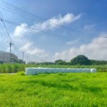 久米島の雑学ネタ