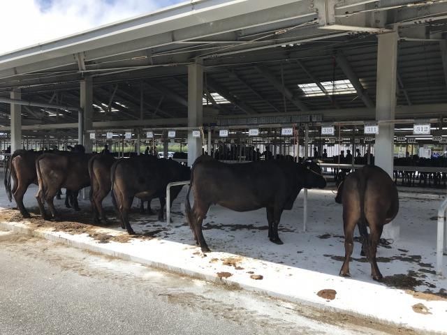 久米島家畜市場
