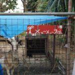 実録!哺乳瓶でミルクを飲むヤギ。鳥島の珍スポット『メェ〜メェ〜ファーム』